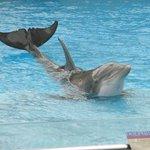 Dolphin show at the Corpus Christi Aquarium