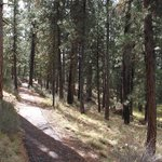 paved path to Big Tree