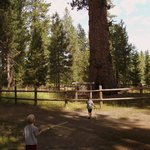 Big Tree site