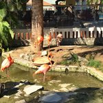 Flamingos by the pool (past the Cafe Domincano)