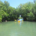 Through the mangrove tunnel