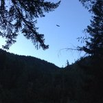 Saw eagle from deck
