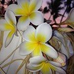 I magnifici fiori che trovi in giardino ��