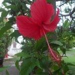 Les fleurs qu'on peut rencontrer dans la résidence