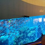 The aquarium.  Free viewing but you can pay for more. Similar to Underwater World in QLD (no sea