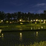 rice fields by night