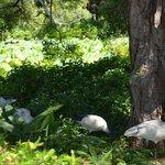 Royal Botanic Gardens (3)