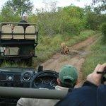 Reserva Privada  Sabi Sand del Parque Kruger