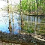 pond to bird watch