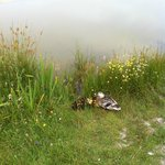 Ducklings on site