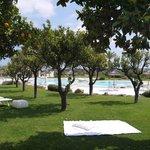 vue sur le jardin et en fond la piscine