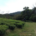 The tea gardens outside the cottage