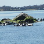 Seals basking in the sun during seal watch tour