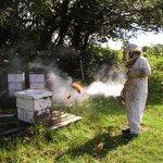 Steve, 3acres Beekeeper