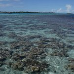 Corals clearly visible from deck outside the villa during low tide. Water is pristine!
