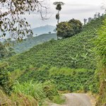 One of many country roads through the mountains of coffee plants. Great for walking.