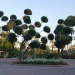 Lorax tree entering property