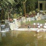 The new flamingo exhibit