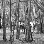 Horseback riding in the Banyan Trees