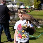 Bird of prey show on during a Easter visit there.. Was £5 per photo, this was mine during them t