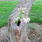flowers growing in knot hole of tree