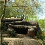 Sleepy Lions
