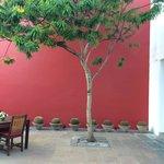 Casareyna patio