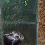 My daughter watching the red eye tree frog