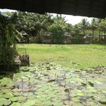 The Heaven : The lily pond
