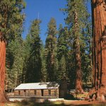Red Wood trees on each side of a cabin in Yosemite