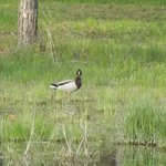 ducks on the pond