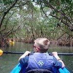 inside the mangrove tunnels