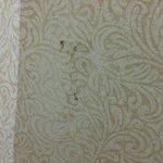 Poop on wall! Yuck!