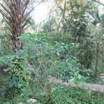 Lovely jungle garden right off our balcony