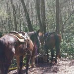 Horses Henry, Strawberry and Cherokee taking a rest while we took a look at the waterfall!