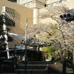 Sakura at Hotel Metropolitan Tokyo