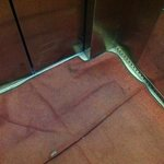 elevator carpet