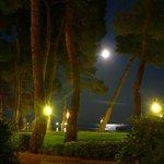 sous la lune et les pins