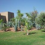 giardino e parte albergo