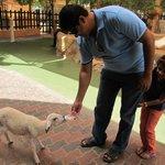 Feeding milk to lamb!