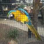 A Macaw at Hunter Valley Zoo.