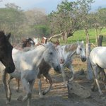 paardrijden buena vista lodge
