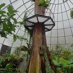 Aussichtsplatform im tropischen Haus