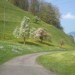 봄의 고향곡.