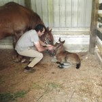 1 day old foal