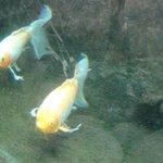 aquarium ingang hotel