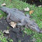 krokodillenfarm