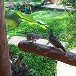 Doves Outside Room