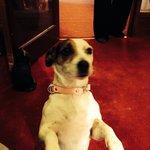 Smiya the cute little dog
