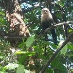 En el restaurante Los Monos